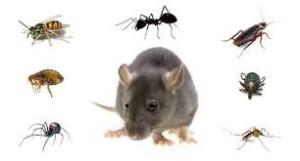شركة مكافحة الفئران بالرياض - شركة مكافحة فئران بالرياض - مكافحة الفئران - شركات مكافحة الفئران