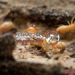 شركة مكافحة النمل الابيض بالدمام للايجار 01220309043