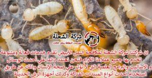 افضل شركة مكافحة النمل الابيض بالدمام