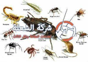 شركات مكافحة حشرات بخميس مشيط ؟