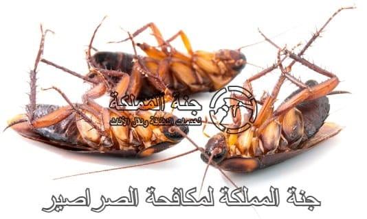 تعتبر طرق مكافحة الصراصير في الرياض
